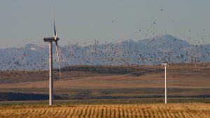 GeoJot+ avian field study app